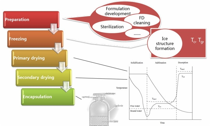 Basic process of biological freeze-d